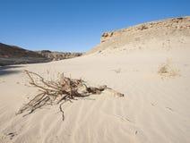Small dead desert bush on a sand dune slope stock photos