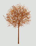 Small deciduous tree in the autumn Stock Photo