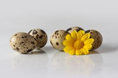 Yellow decorative flower and partridge eggs. Small decorations and partridge eggs Royalty Free Stock Images