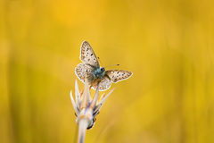 Small decorative butterfly sitting on the grass in bright Sunny day on a meadow royalty free stock photos