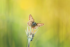 Small decorative butterfly sitting on the grass in bright Sunny day on a meadow Royalty Free Stock Images