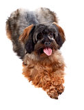 Small decorative doggie Royalty Free Stock Photography