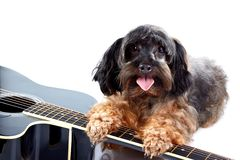 Small decorative doggie and guitar. Royalty Free Stock Photography