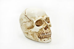 Small decorative human skull. Royalty Free Stock Image