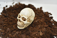 Small decorative human skull. Isolated on white background Royalty Free Stock Images