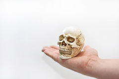 Small decorative human skull. Stock Photos