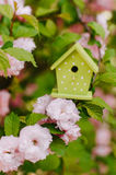 Small decorative nesting box on the flowering branch Stock Photography