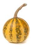 Small decorative orange pumpkin isolated on white background Stock Images