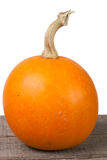 Small decorative orange pumpkin on a wooden board isolated  white background Royalty Free Stock Image