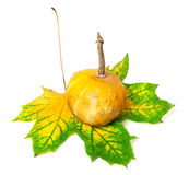 Small decorative pumpkin on autumn multicolor maple-leaf Royalty Free Stock Photography