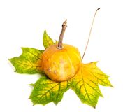 Small decorative pumpkin on autumn yellowed maple-leaf Royalty Free Stock Photography
