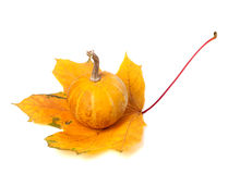 Small decorative pumpkin on orange autumn maple-leaf Stock Images