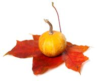 Small decorative pumpkin on red autumn maple-leaf Royalty Free Stock Photos