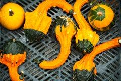 Small decorative pumpkins Stock Photos