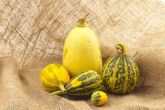 Small decorative pumpkins. Stock Photo