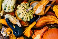Small decorative pumpkins background royalty free stock photos