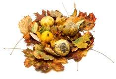 Small decorative pumpkins on dry autumn leafs Stock Photos