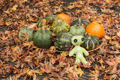 Small decorative pumpkins on the fallen leaves with green doll Royalty Free Stock Image