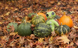 Small decorative pumpkins on the fallen leaves with green doll Royalty Free Stock Photos