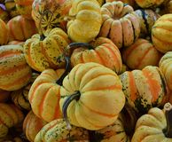 Small Decorative Pumpkins  Royalty Free Stock Images