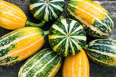 Small decorative pumpkins in the garden on a wooden bench for decorating an apartment or a house for a Halloween holiday, Royalty Free Stock Images