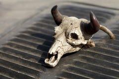 Small decorative skull Stock Photos