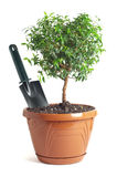 Small decorative tree Royalty Free Stock Images