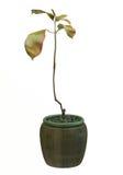 Small decorative tree Stock Photos