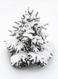 Small decorative tree in the snow Stock Photos
