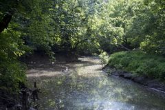 Evening view of small stream stock images