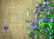 Small delicate blue flowers veronica persian, border on canvas. Fabric, rustic style Royalty Free Stock Photos