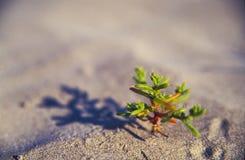 Small desert plant Stock Images