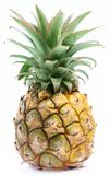 Small desert ripe pineapple. Stock Photography
