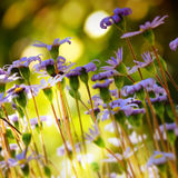 Small details of nature. View at ground level of small wild flowers royalty free stock photos