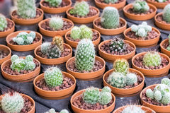 Small different types of cactus plants. Royalty Free Stock Images