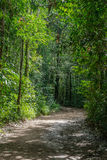 Small dirt road in the forest Stock Image