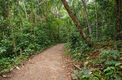 Small dirt road into the tropical forest. Intense green vegetation. Small dirt road into the tropical forest. Intense green vegetation stock photo