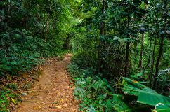Small dirt road into the forest. Intense vegetation. Small dirt road into the tropical forest. Intense green vegetation royalty free stock photo