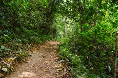Small dirt road into the forest. Intense vegetation. Small dirt road into the tropical forest. Intense green vegetation stock images