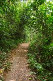 Small dirt road into the forest. Intense vegetation. Small dirt road into the tropical forest. Intense green vegetation royalty free stock image