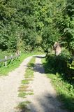 Small dirt road. Small unpaved road goes trough dense scrub royalty free stock photo