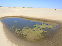 Small dirty lake. The photo is made on the river Don. Small boggy lake among sand Royalty Free Stock Images