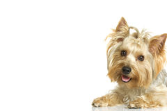Free Small Dog Stock Images - 22494414