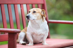 Small dog on the bench Royalty Free Stock Photography