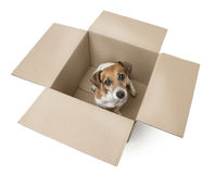 Small Dog in the Box Stock Photos
