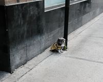 Small dog seen tied to a lamppost by an empty pavement. The small dog can be seen wearing a dog jacket, as the image was taken in winter. The pavement appears stock photo