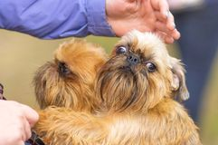 Small dog close-up stock photography
