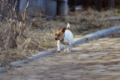 Small dog with a collar on the street stock image