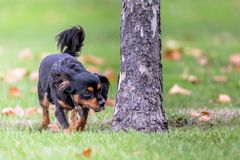 Small dog enjoying the outdoors stock image
