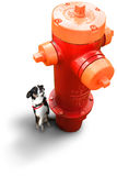 Small Dog at Fire Hydrant. Small dog looking up at a red and orange fire hydrant Royalty Free Stock Photo